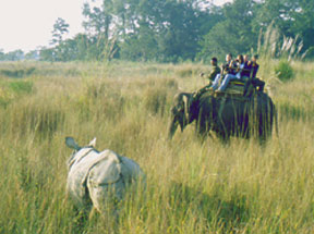 Chitwan Jungle safari on Elephant-back