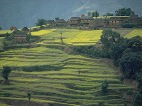 Trekking through terraced hillsides