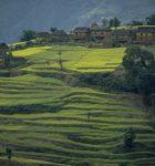 NepalTrc