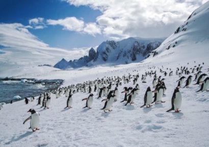 Antarctica Mountain Landscape Penguin-Crew Shot 2010-IMG9178 Lg RGB