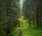 Vega Island Forest GADV